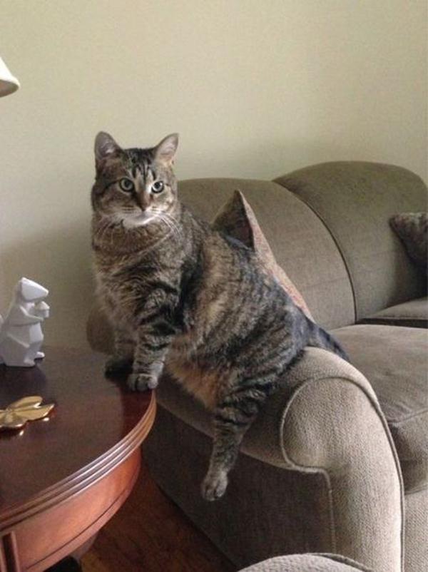 Funny cats - part 63 (35 pics + 10 gifs), funny pics of cats, cat pics, funny pics