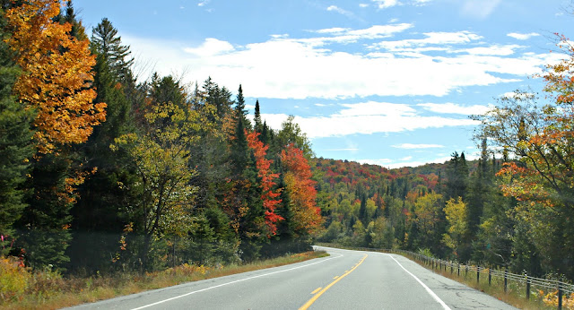 Fall foliage in the mountains - www.goldenboysandme.com