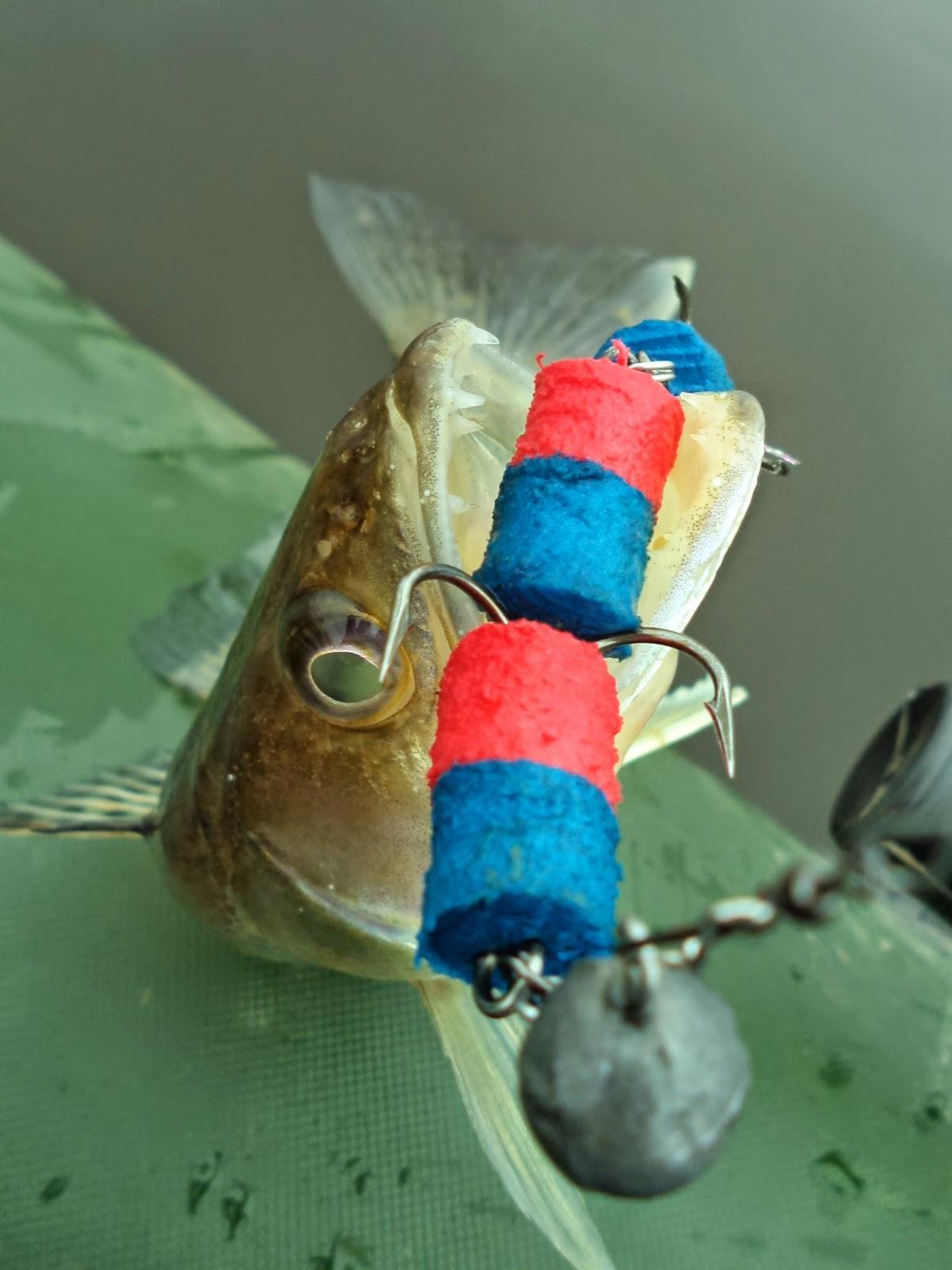 Ловля щуки на живца у дна и в толще воды Рыбалка