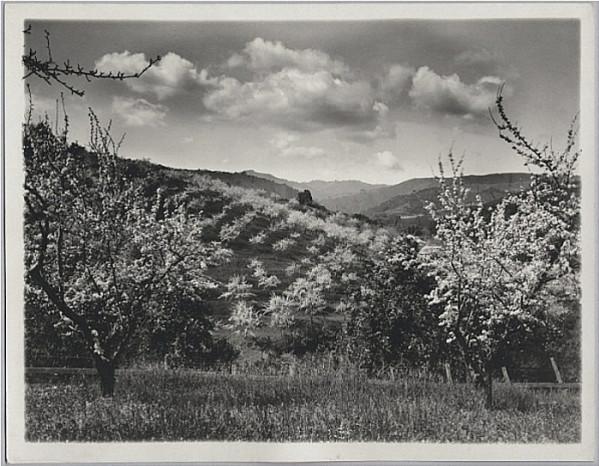 San Jose Orchard