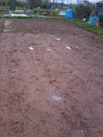 waterlogged ground at the allotment