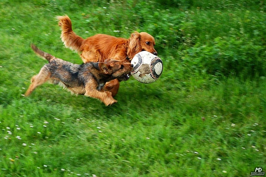 30 photos cute animals play ball