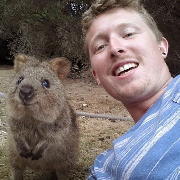 quokka selfie trend australia-3
