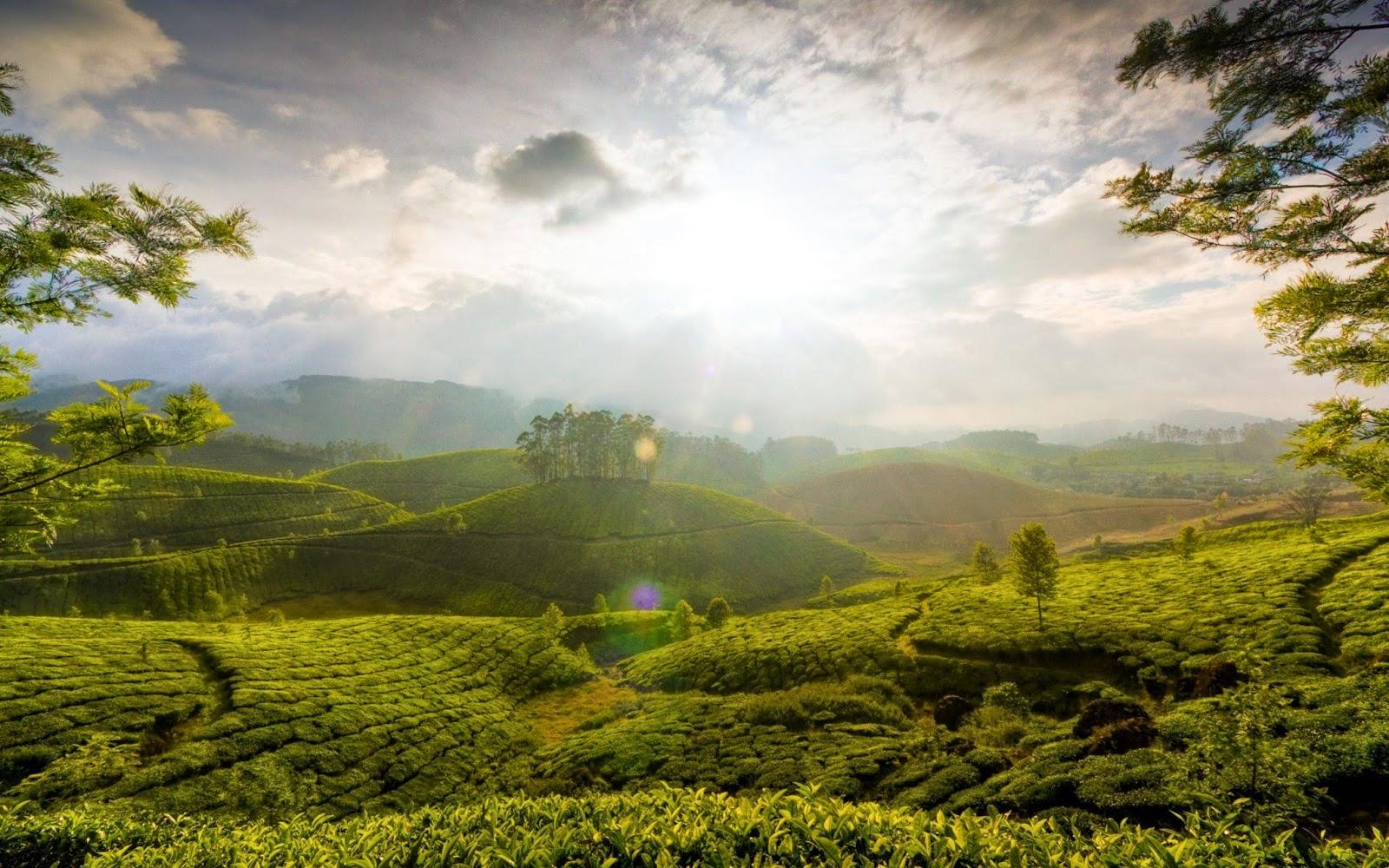 Tea garden hill, Munnar