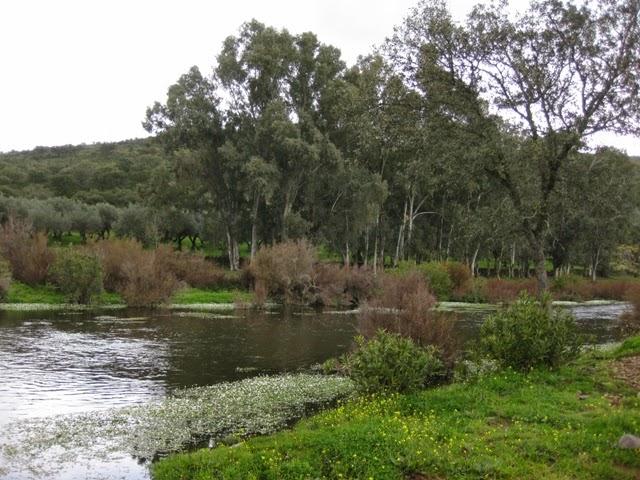 Arroyo del Caño
