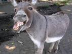 Donkey Story [ www.BlogApaAja.com ]