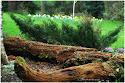 ogród  leśny - uroczysko