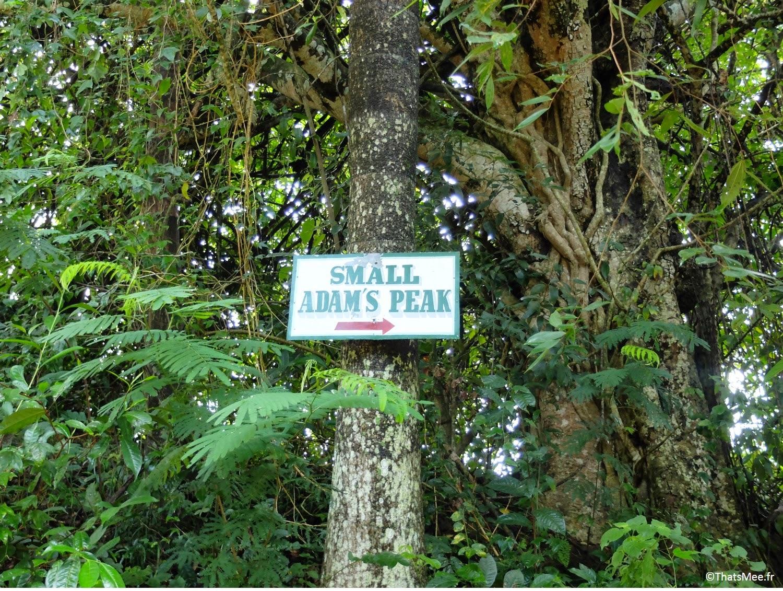 Vue depuis Small Adam's Peak Sri-Lanka plantations thé montagne
