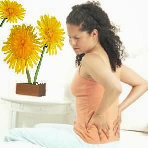 Sarılık tedavisi, safra taşları, verem tedavisi, ödem, Karahindiba Çayı, karahindiba kökleri, halsizlik sindirim sistemi