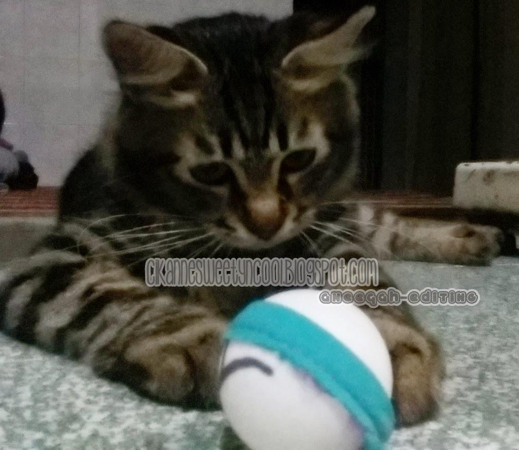 Kucing Parsi Main Bola