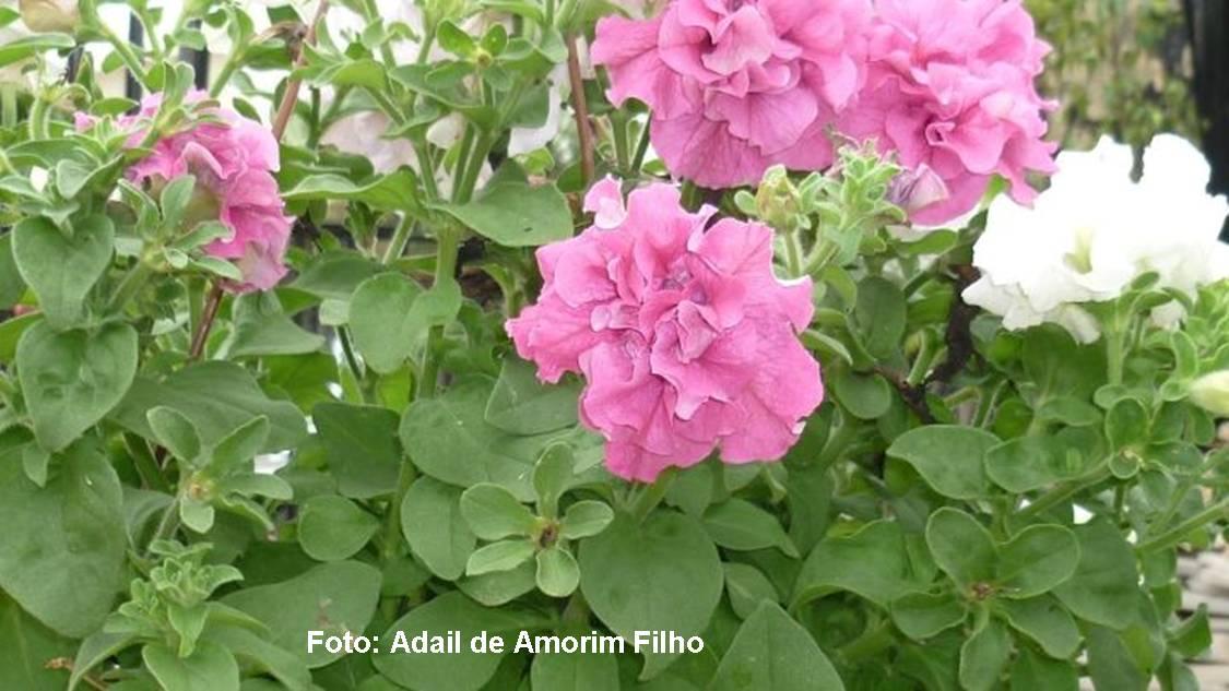 Espaço Verde Flores coloridas alegram o jardim durante o ano todo