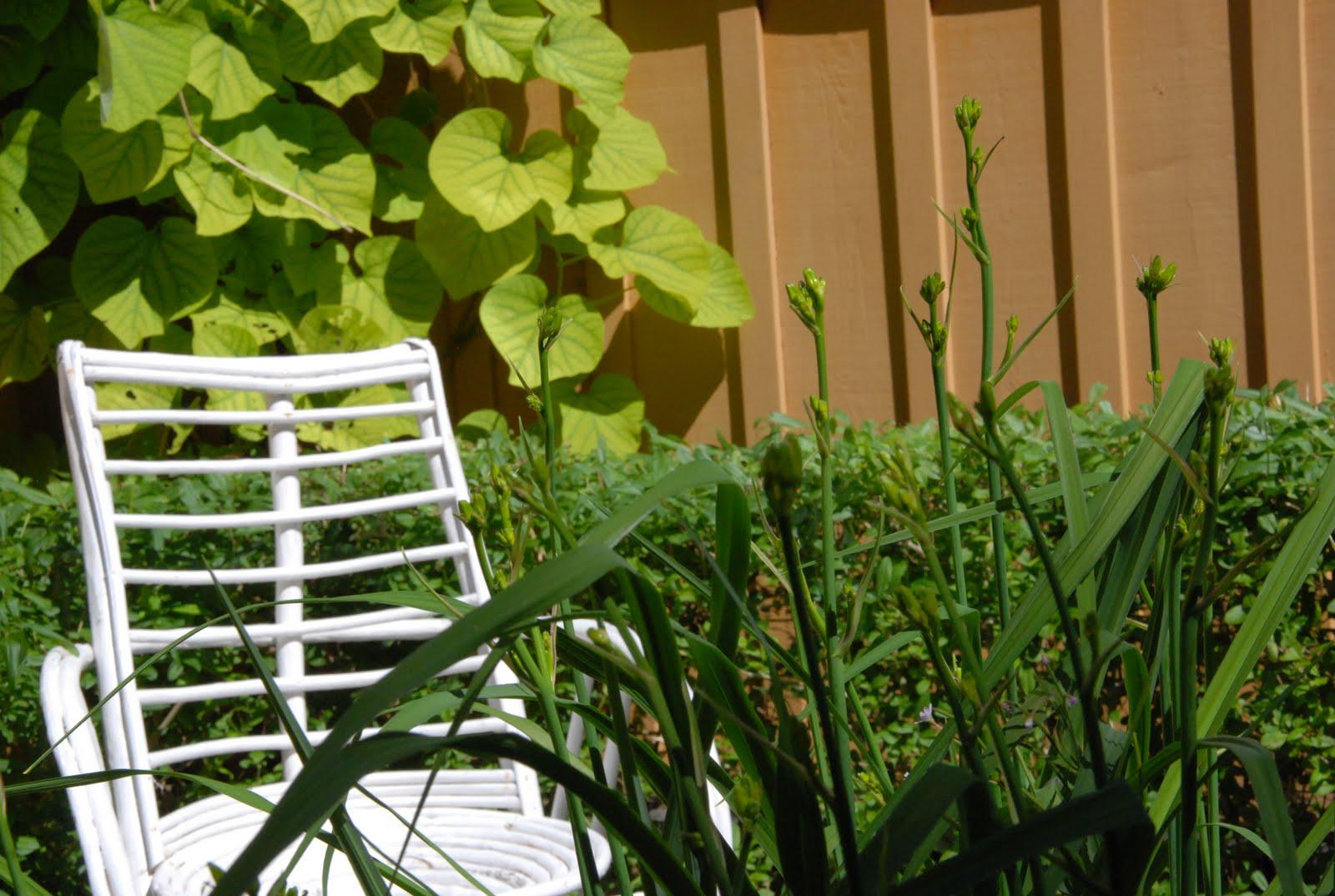 Den passionerade trädgårdsturisten: schersminen doftar och ...