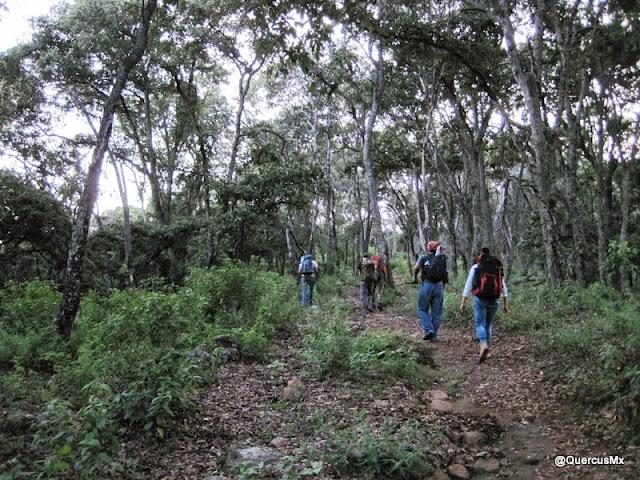 En el bosque de encino, Cerro Viejo