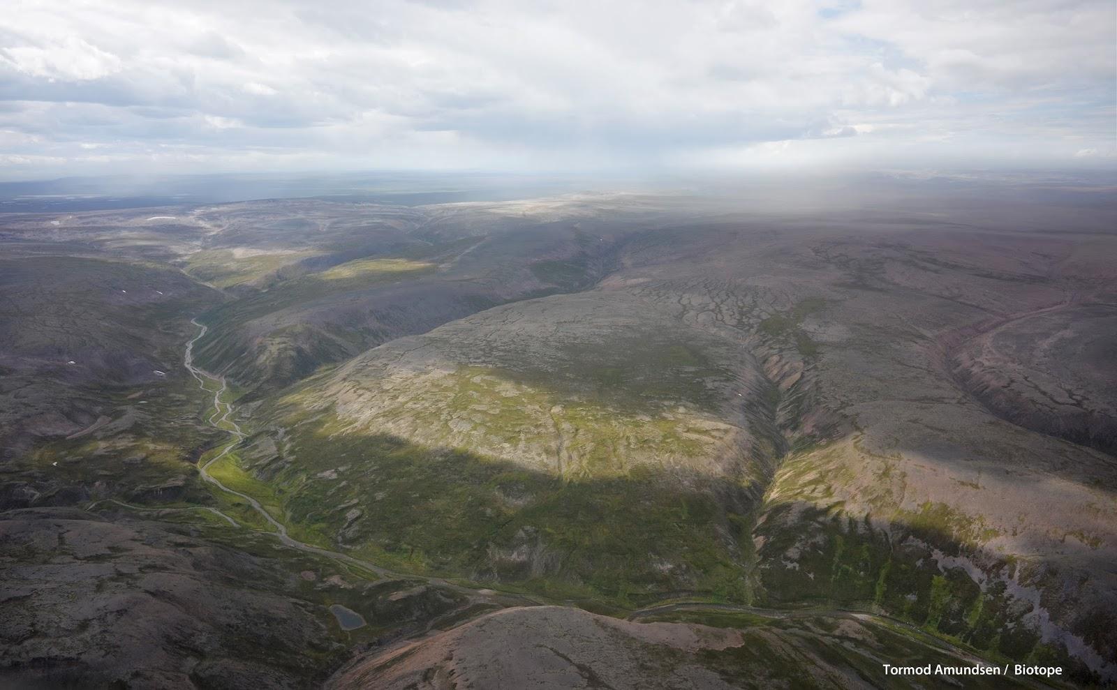 biotope: Birding Varanger - the winter, spring & summer ... | 1600 x 989 jpeg 276kB