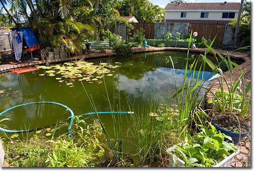 Byzantineflowers free energy living off the grid - Swimming pool to fish pond conversion ...