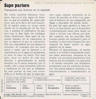 Blog Safari club, características de el Sapo partero
