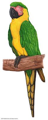guacamayo verde y amarillo de Dominica Ara atwoodi