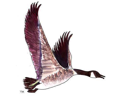 Goose by Yukié Matsushita