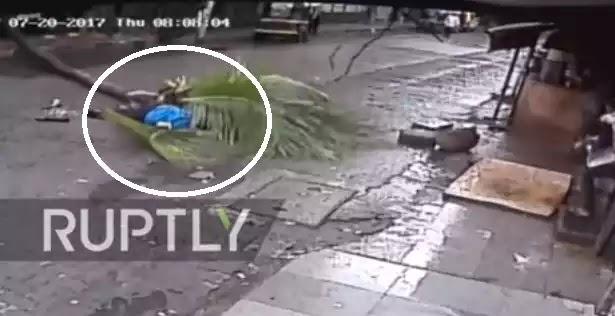 Φρικτό δυστύχημα: Δένδρο καταπλάκωσε παρουσιάστρια στο Μουμπάι [βίντεο]