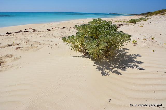 Conception Island