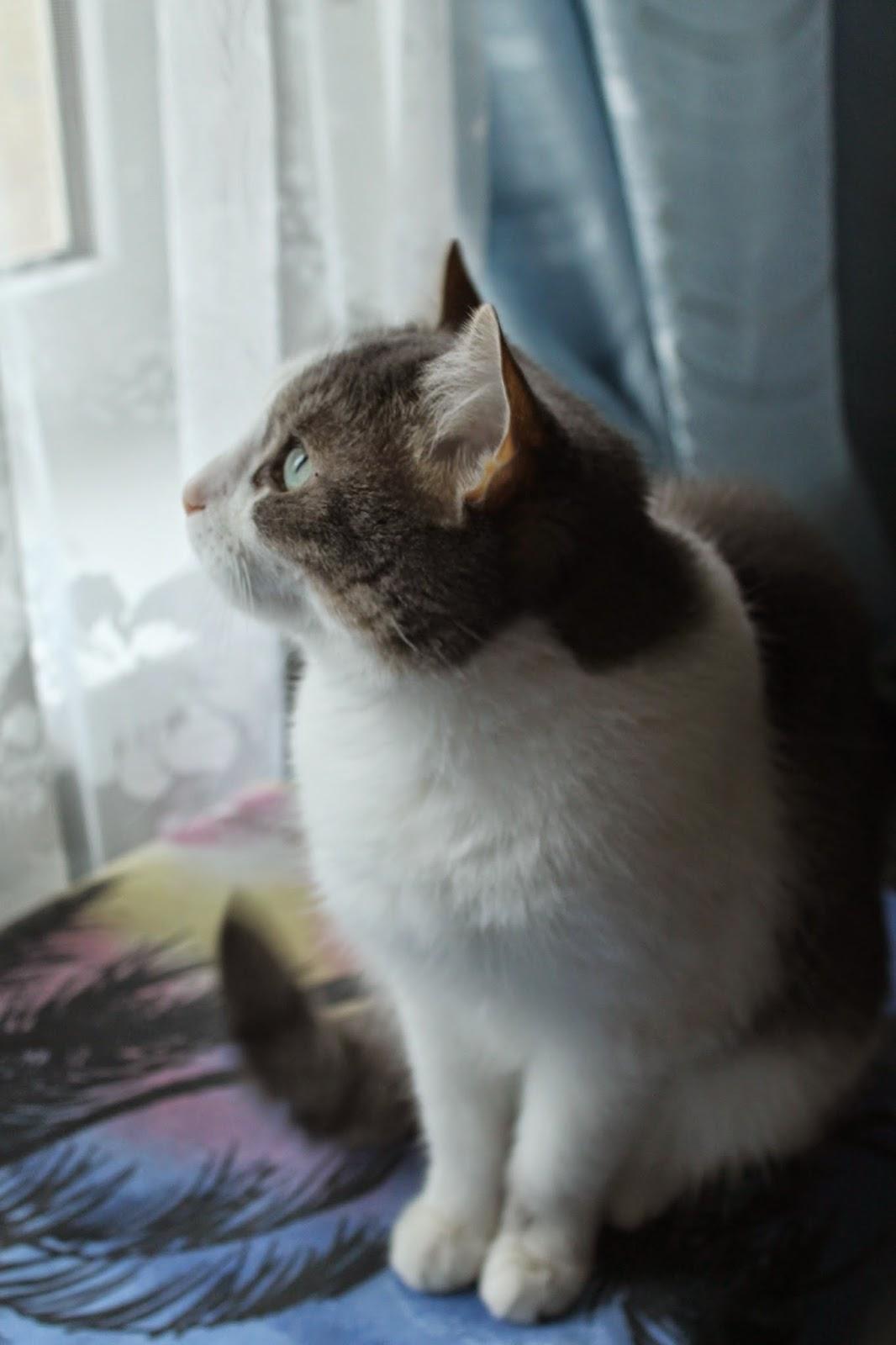 Кошка, домашняя кошка