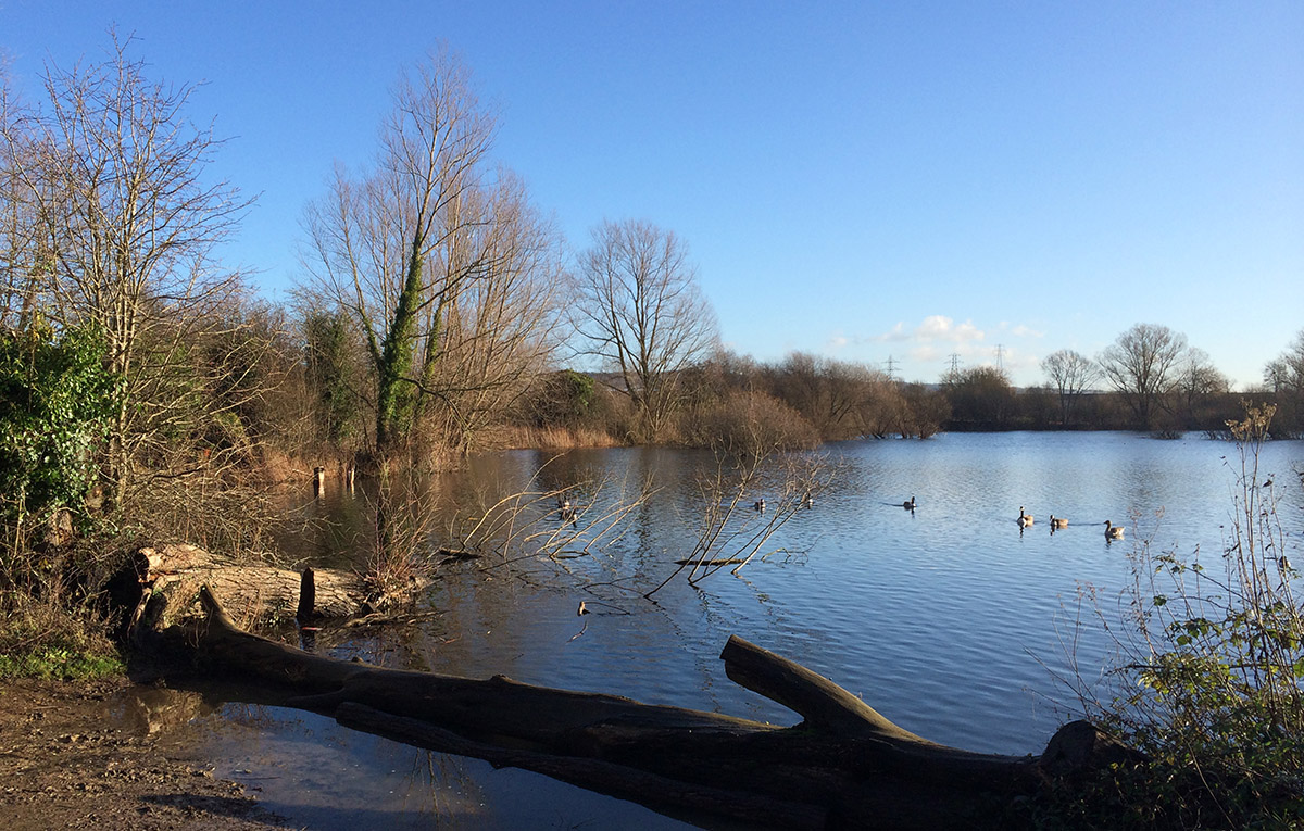 Roaden Island Lake.  Leybourne Lakes, 2 January 2014.