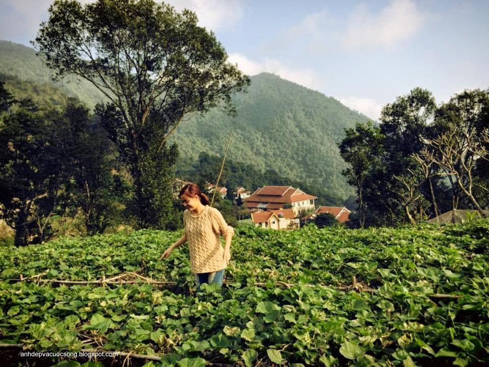 Ca sĩ Hoàng Thùy Linh nô đùa bên vườn rau 7