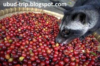 Coffee Luwak Ubud | Ubud Trip