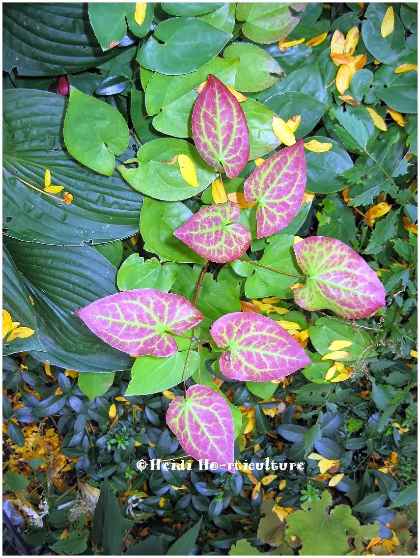 Heidi Horticulture