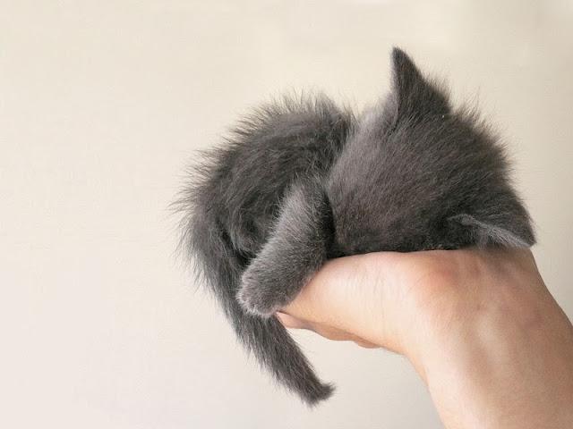 котёнок спит на руке