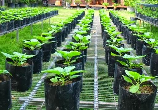 Hasil gambar untuk budidaya tanaman organik