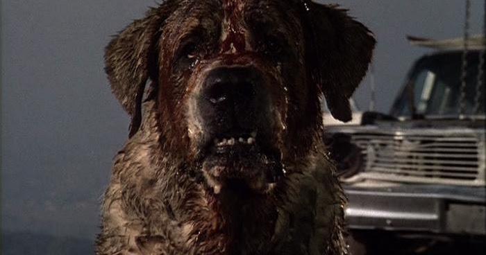 Movie Dog Named Cujo