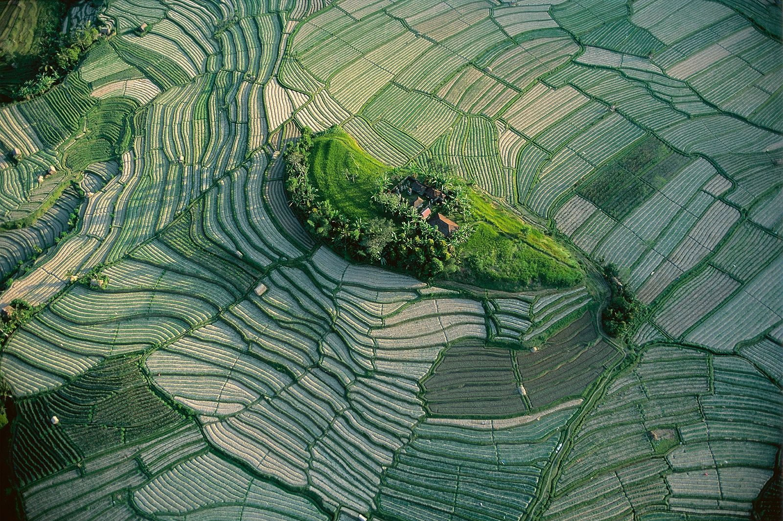 the human contribution to the diversity of life on planet earth in home a documentary by yann arthus