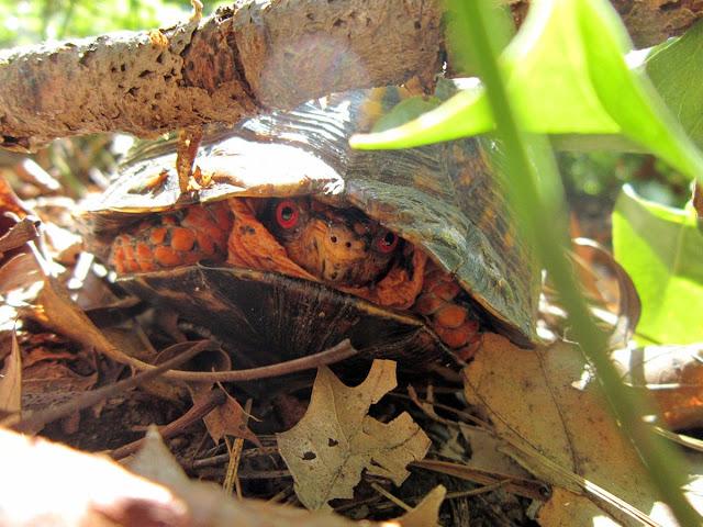 tortoise, funny animal pictures, animal pics