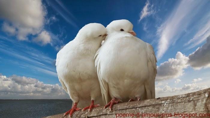 Poeme D'amour et de Confiance,