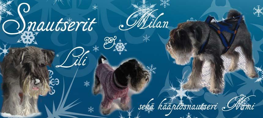Snautserit Milan ja Lili sekä kääpiösnautserit Nomi, Ilsa ja Uri
