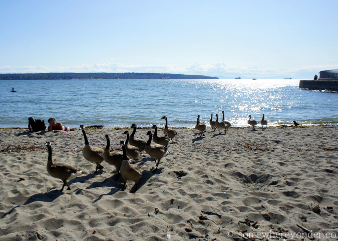 Geese on the beach - Vancouver, Canada