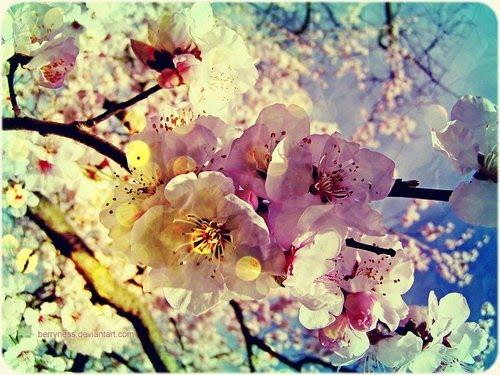 Flores para perfumar a alma....