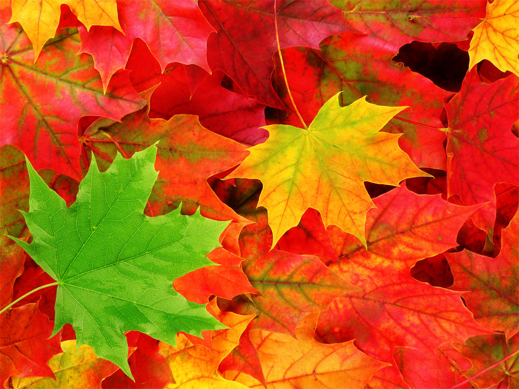 wallpapers windows 7 autumn wallpapers