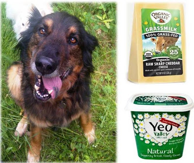 Lactose Intolerance From Cheese In Dogs And Cats