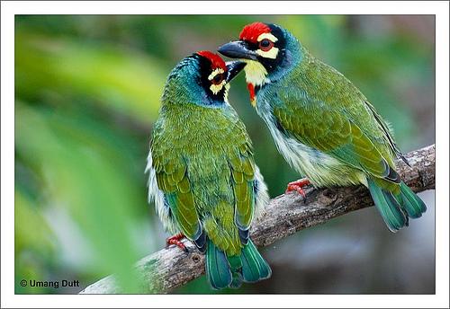 Birds Couple