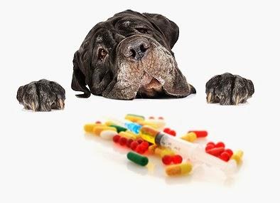 Impfungen beim Hund