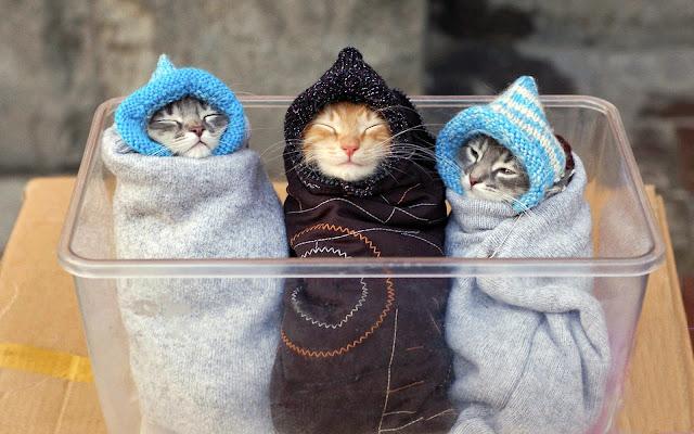 Hình nền mèo cute nhất