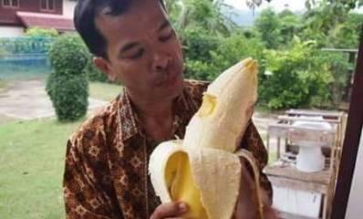 Fenomena pohon pisang Raksasa di Papua sebesar paha