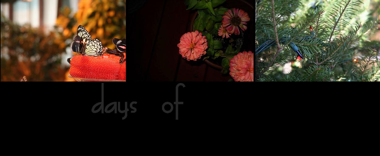 365 Days Of Captured Sunshine