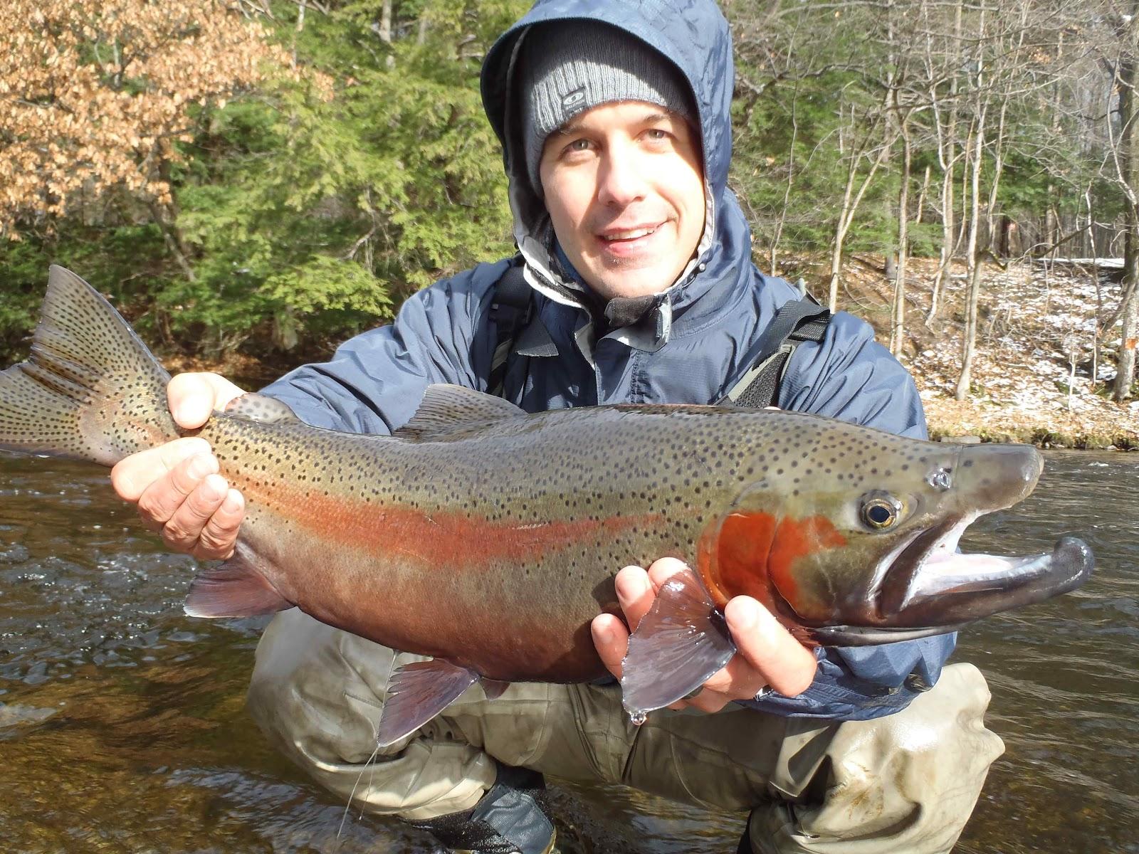 Great fall steelhead fishing trip belle sortie d 39 automne for Fly fishing for steelhead