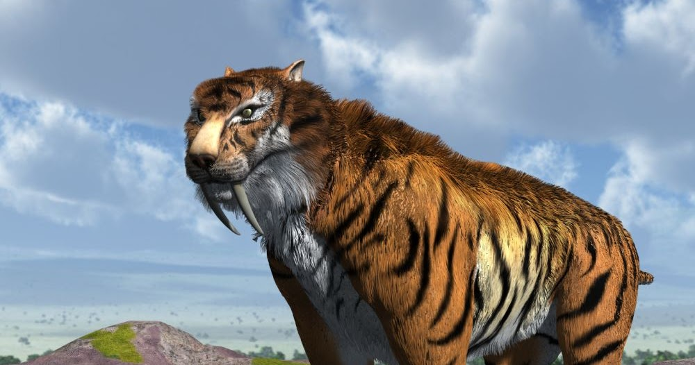10 Facts About the SaberTooth Tiger  ThoughtCo