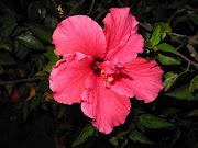 Flor roja representa amor. img