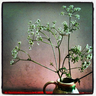 cow parsley in a jug