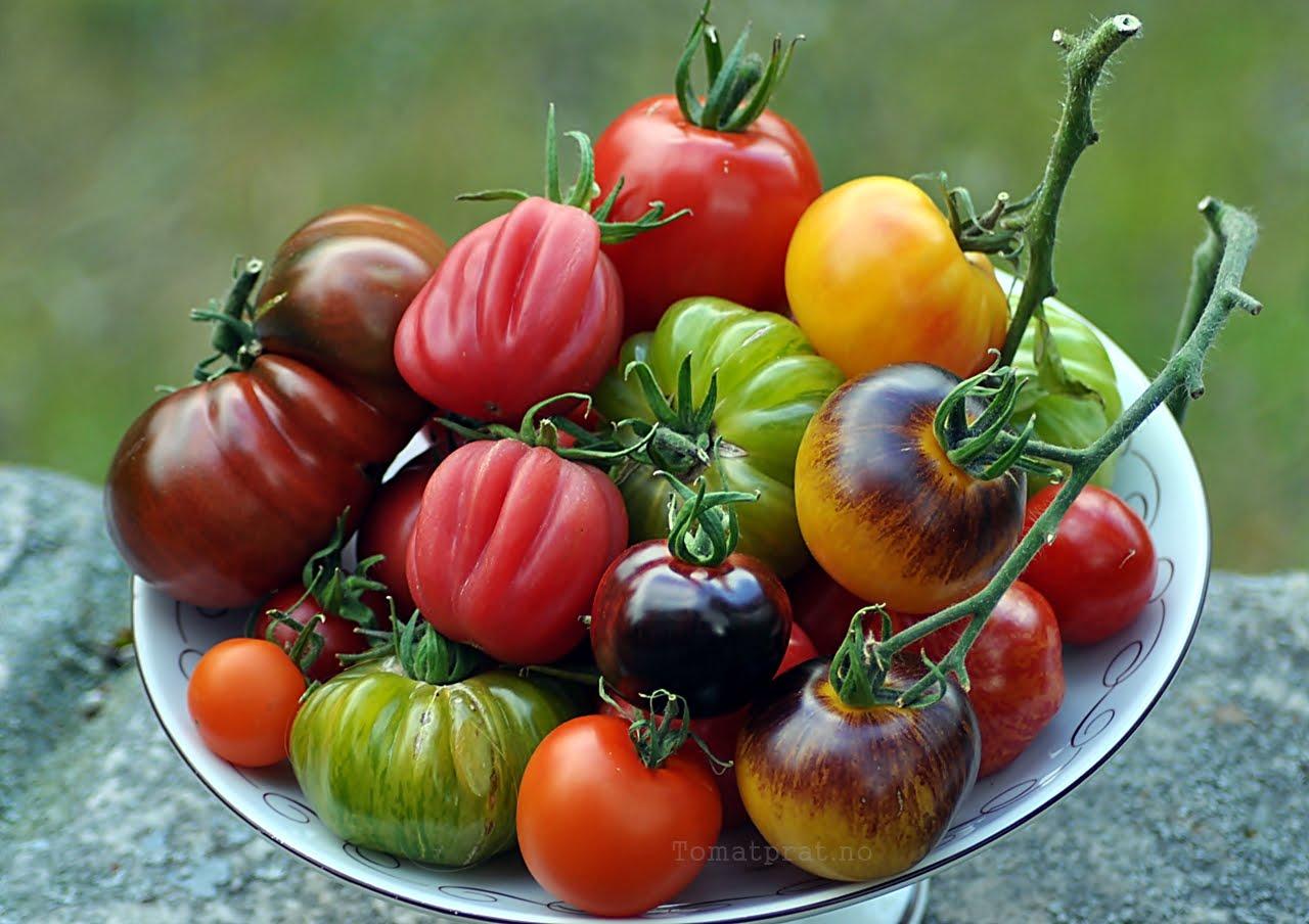 Assortert blanding av hjemmedyrkede tomater :-)